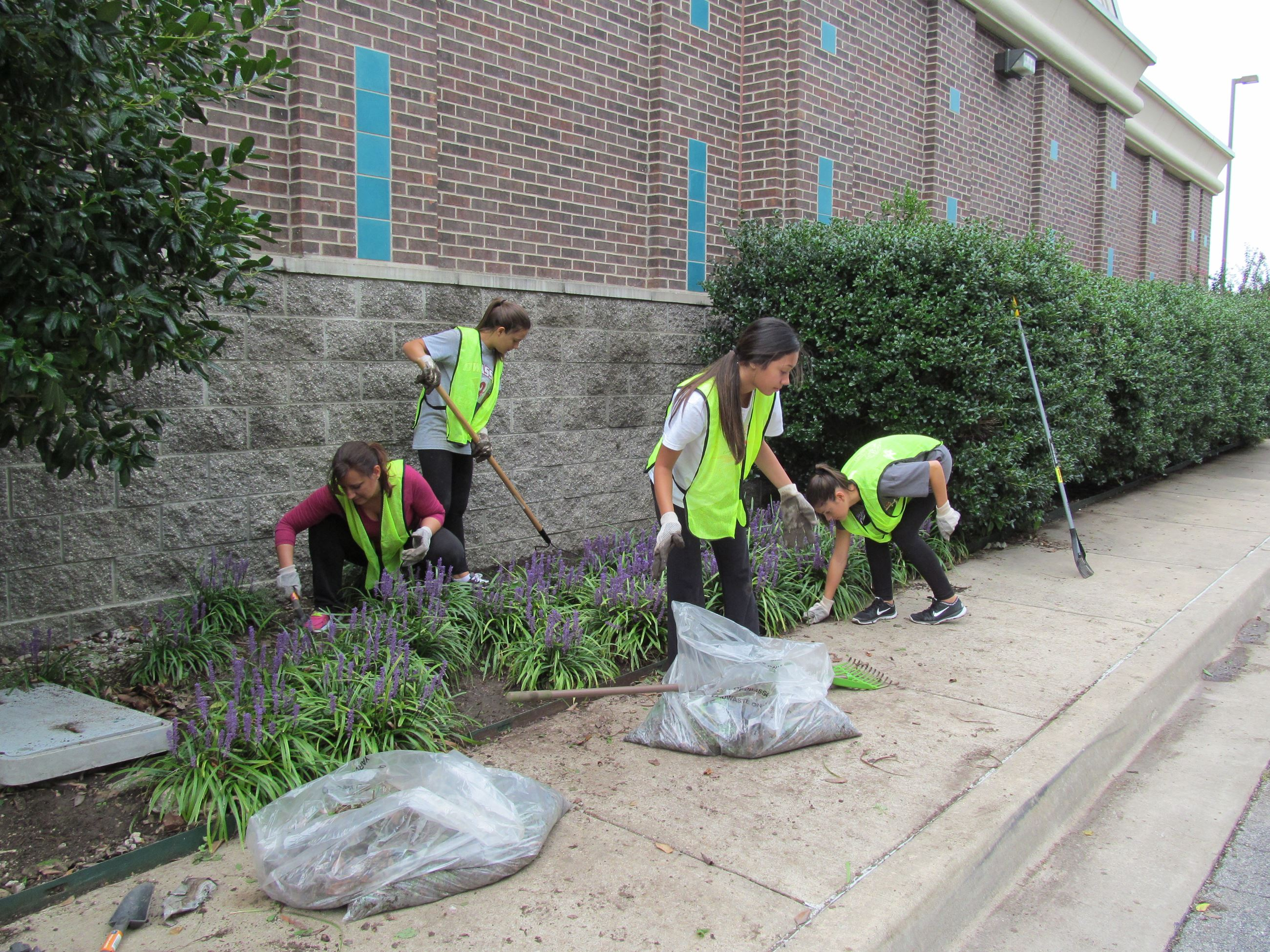 City Hall flowerbed clean out